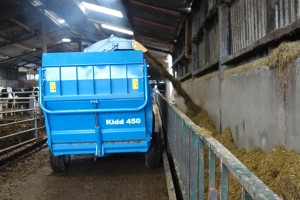 Feeding silage over a barrier.